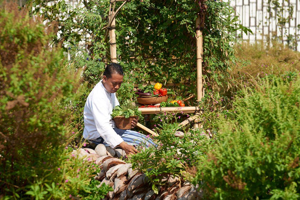 Alila Zero Waste Organic Garden at Alila Sminyak
