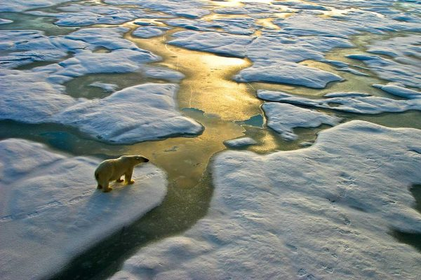 Technologies Polar Bear