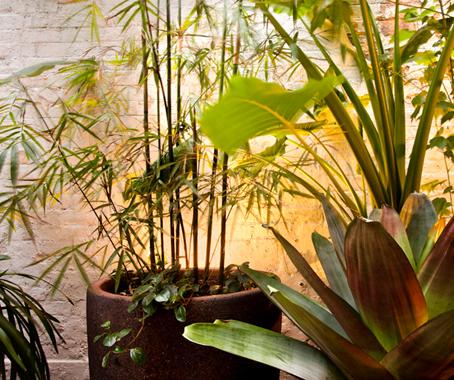 bills by pepo botanic design architecture design. Black Bedroom Furniture Sets. Home Design Ideas
