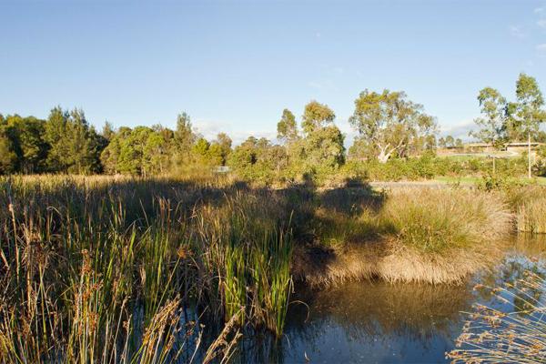 MCGREGORCOXALL LIZARD LOG wetlands
