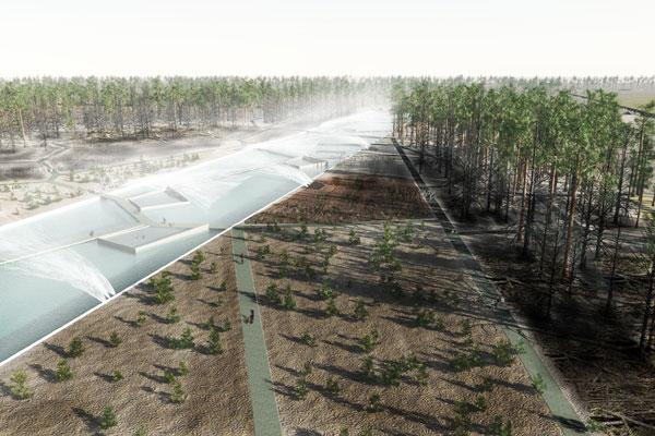 Water-Harvesting_Pine-Plantation