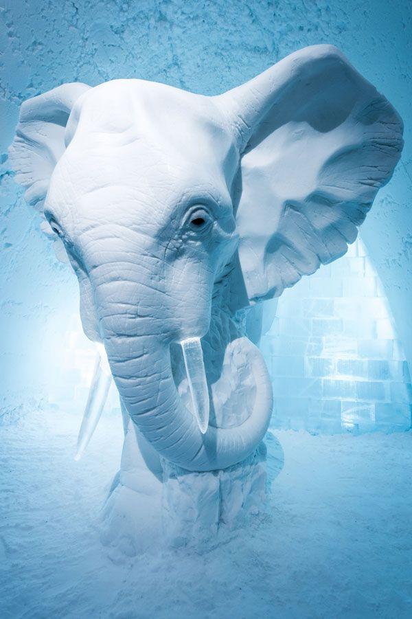 medium_Elephant_in_the_Room-_AnnaSofia_Maag_by_Asaf_Kliger