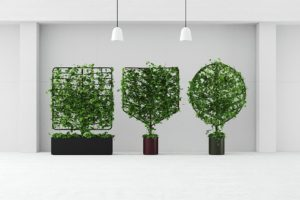 Helen Kontouris' Botanical planter