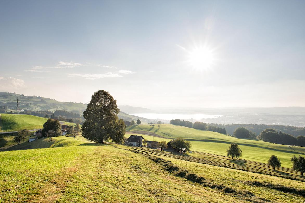 Sunlit farmlands