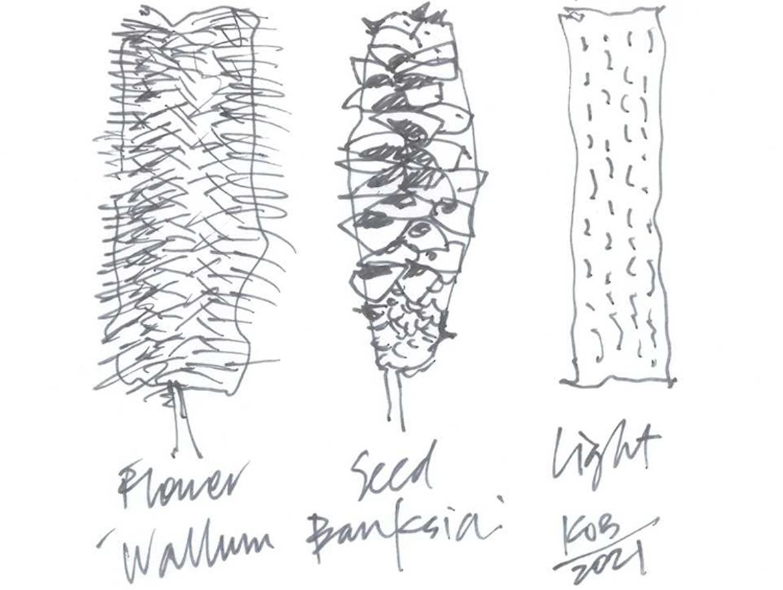Kevin O'Brien's Wallum Banksia sketches